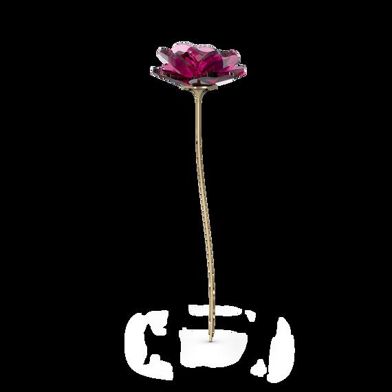 Garden Tales Rose