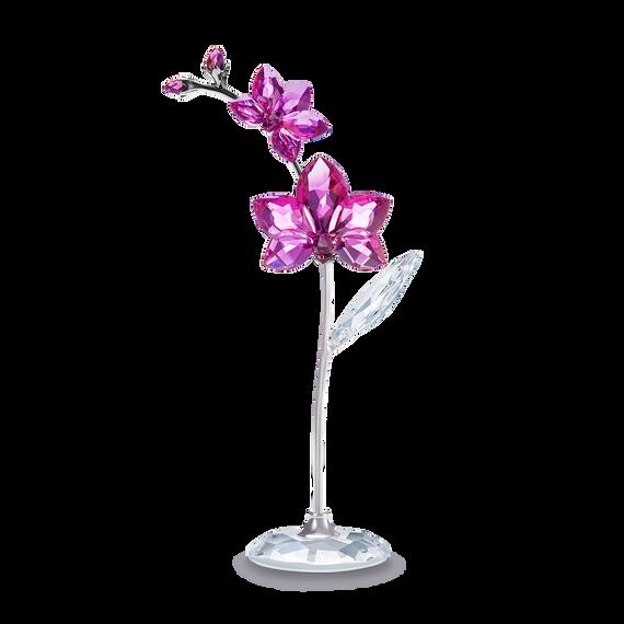 Flower Dreams  - Orchid